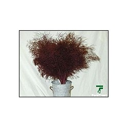 Color Fresh Tree Fern Burgundy 20 Bunches