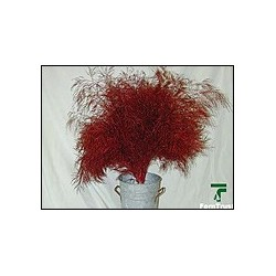 Color Fresh Tree Fern Red 20 Bunches