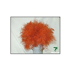 Color Fresh Tree Fern Orange 20 Bunches