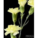 Mini Carnations Yellow 15 Bunches
