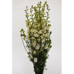 Larkspur White 12 Bunches