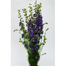 Larkspur Lavender 12 Bunches