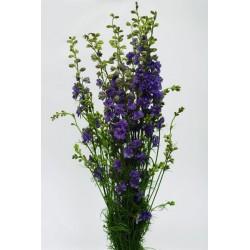 Larkspur Lavender 12 Bunches