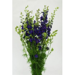 Larkspur Purple 12 Bunches