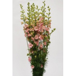 Larkspur Light Pink 12 Bunches
