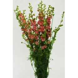 Larkspur Dark Pink 12 Bunches