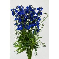 Delphinium Blue Shadow 10 Bunches