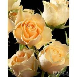 Spray Rose Peach 10 Bunches