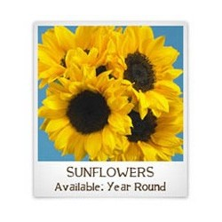 Sunflowers Select 60 Stems