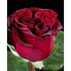 Hearts Red Roses 100 Stems