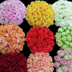 Growers Assortment Roses 100 Stems