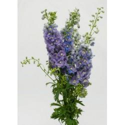 Hybrid Delphinium Lavender 10 Bunches