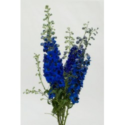 Hybrid Delphinium Purple 10 Bunches