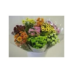 Micro Novelty Poms Assorted 12 Bunches
