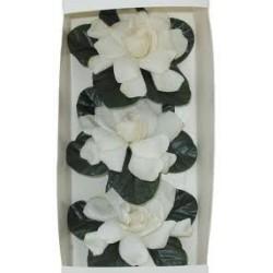 Gardenia 3 Pack