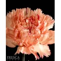 Carnations Orange 150 Stems