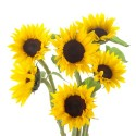 Petite Sunflowers